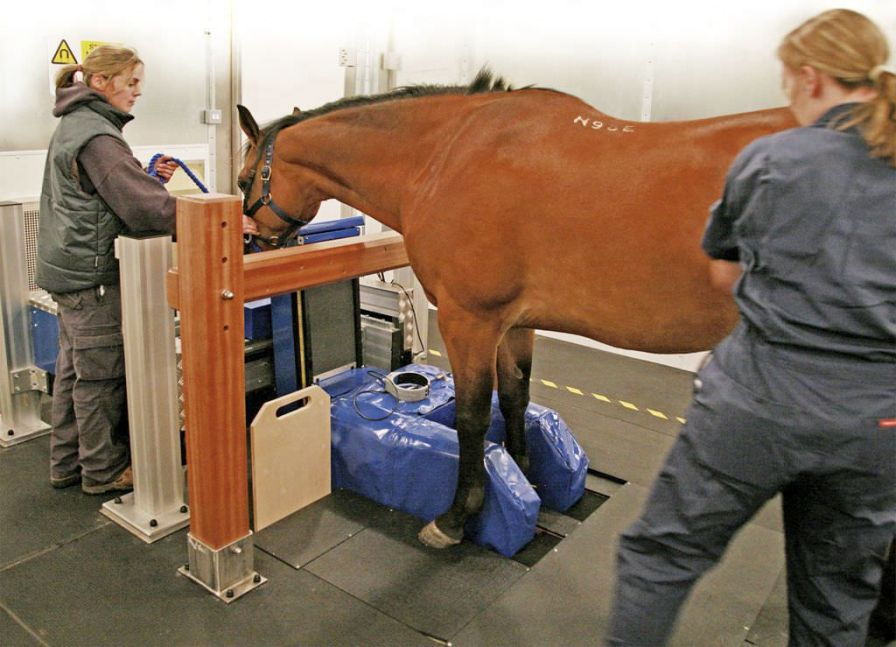 MRI system veterinary tomography system / for equines MRI Hallmarq Veterinary Imaging
