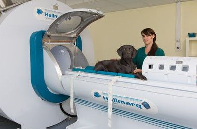 MRI system veterinary tomography system / for companion animals 1.5 T | PetVet Hallmarq Veterinary Imaging