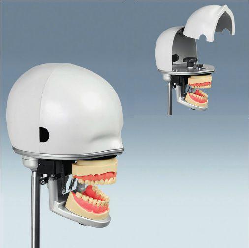 Dental care training manikin / head PK-2 | PK-2 HGB frasaco