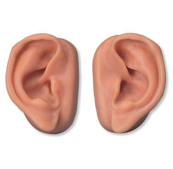 Ear anatomical model / acupuncture N16 3B Scientific
