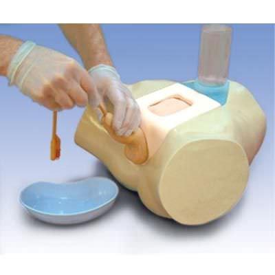 Urinary catheterization simulator / male W19351 3B Scientific
