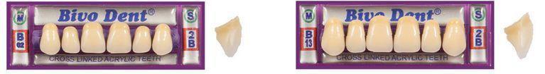Resin dental prosthesis / upper incisor Bivodent