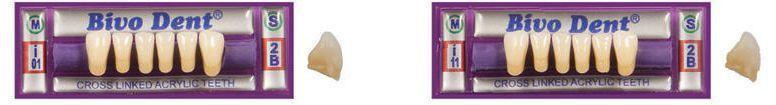 Resin dental prosthesis / lower incisor Bivodent