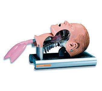 Intubation simulator Ambu