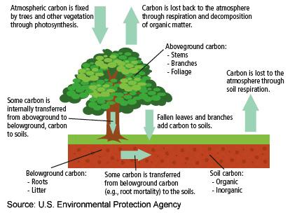 reforestation impact on climate ted ed. Black Bedroom Furniture Sets. Home Design Ideas