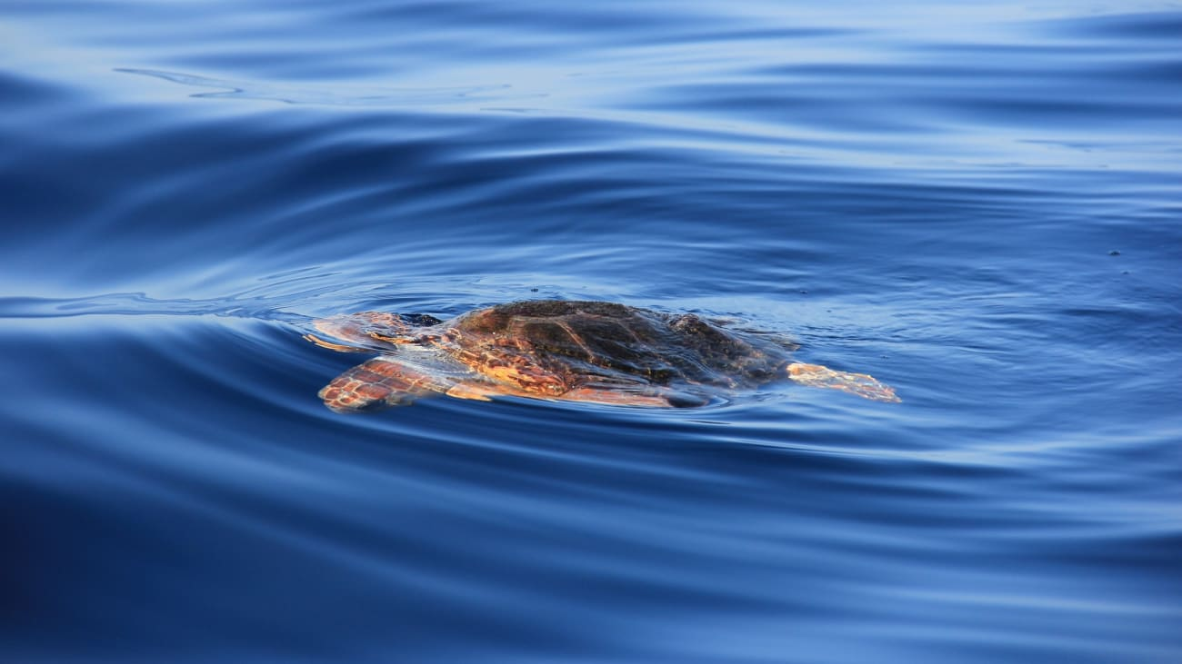 Kayaking and Snorkeling With Turtles em Tenerife