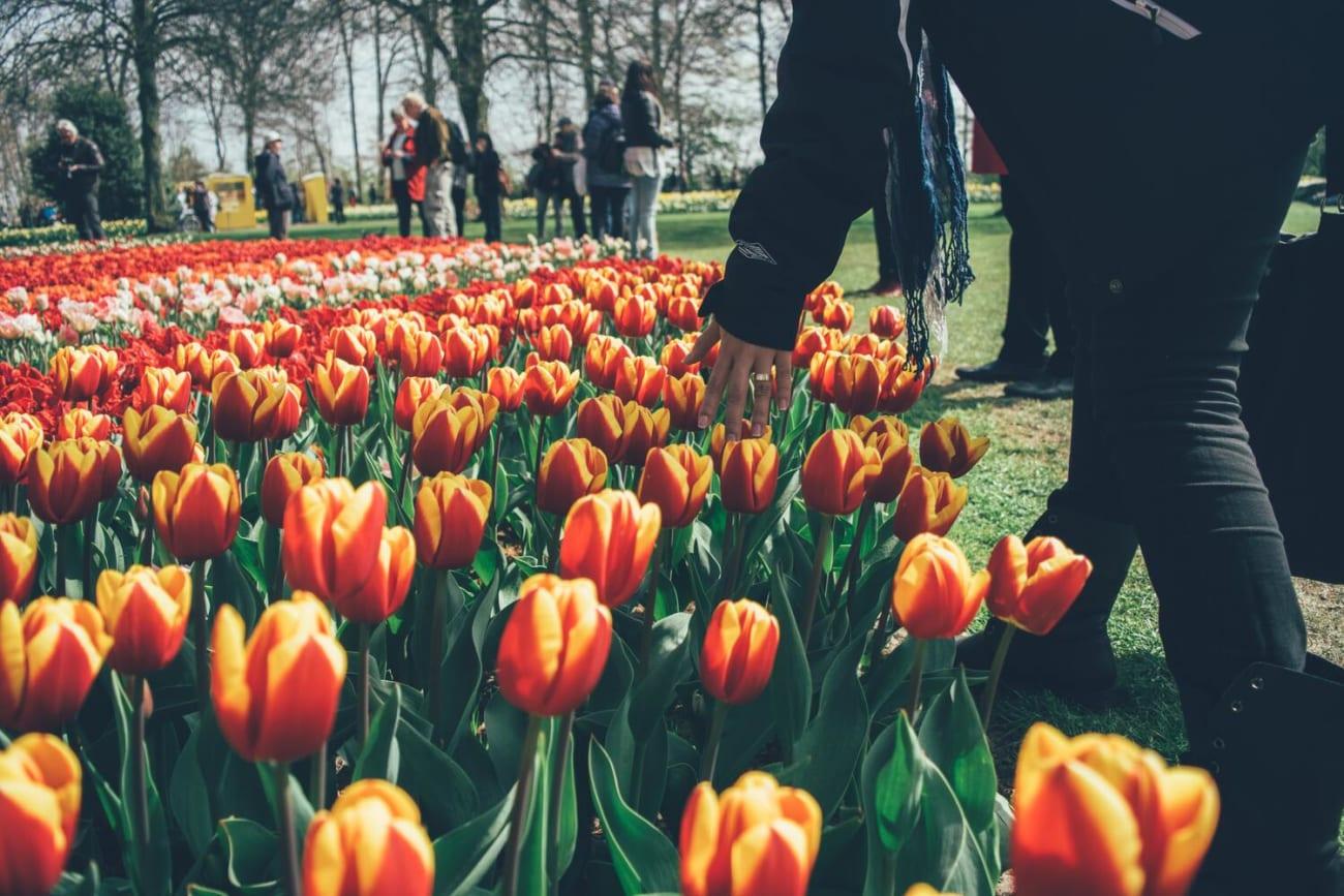 Keukenhof Gardens Day Trips from Amsterdam