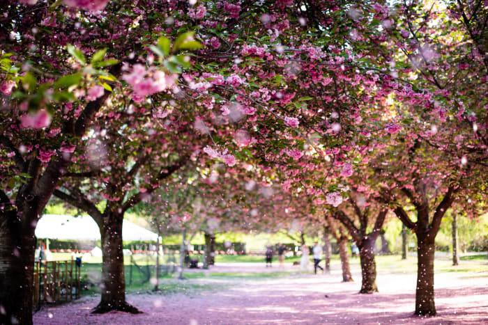 New York au printemps