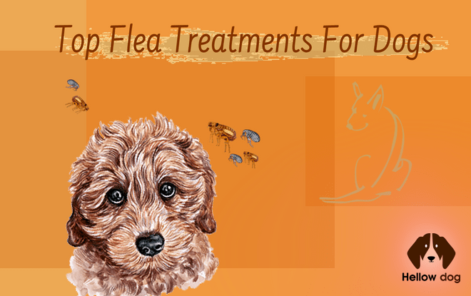 top flea treatment for dogs