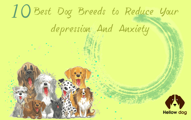 10 Best Dog Breeds To Reduce Your Derreѕѕion And Anxietu Hellow Dog