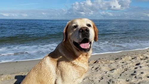 Beach Holidays with dog