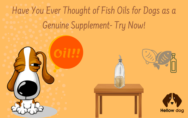 Best Fish Oils for Dogs