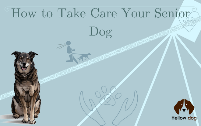 senior dog care