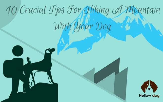 Tips For Hiking A Mountain With Your Dog