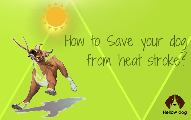canine heat stroke