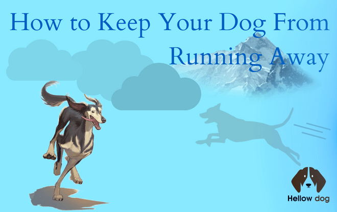 dog keeps running away