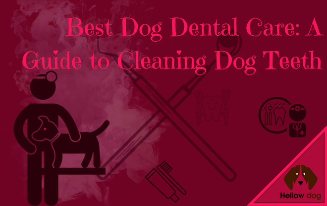 Best Dog Teeth Cleaning Chews