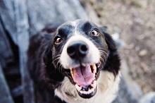 Best Way to Clean Dog's Teeth