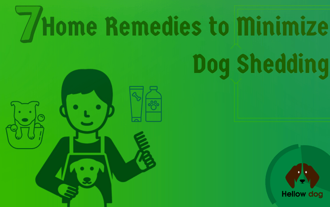 home remedies to stop dog shedding