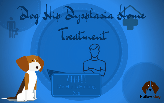 Dog Hip Dysplasia Home Treatment