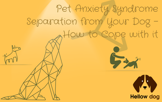 Separation anxiety in dogs