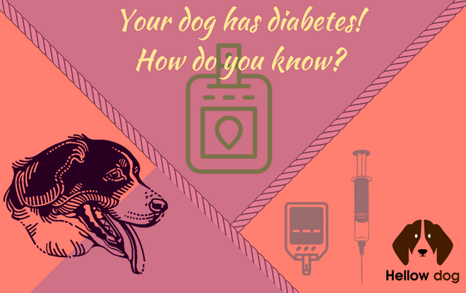 dog diabetes cost