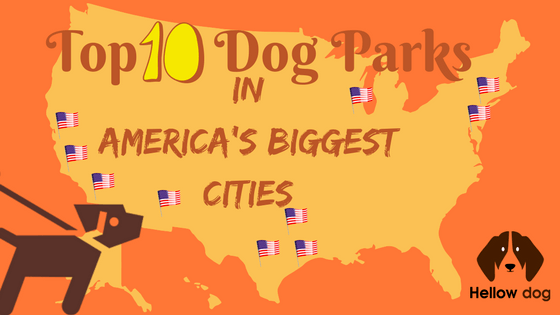Places That Allow Dogs