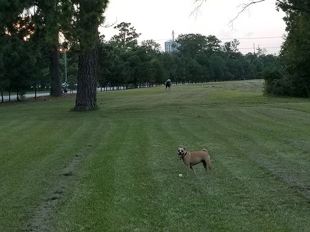 Congressman Bill Archer Bark Park in Houston, TX