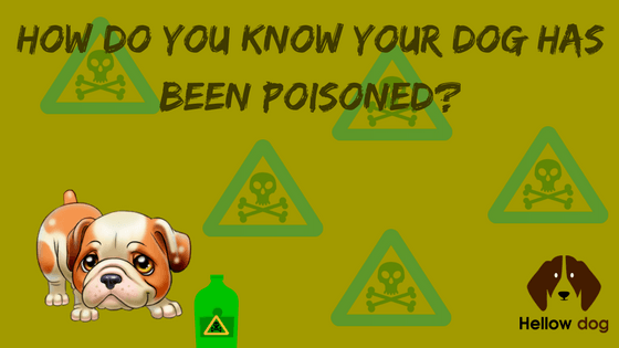 Dog Poisoning First Aid