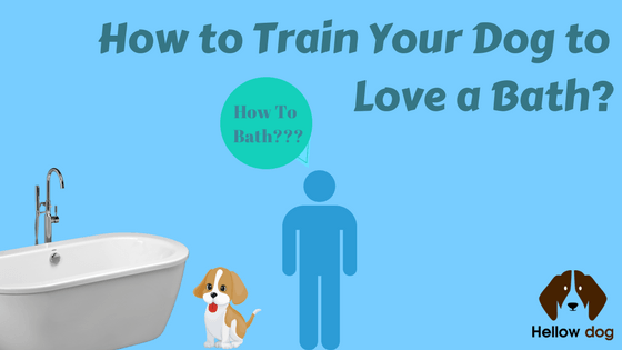 How to Give a Dog a Bath at Home