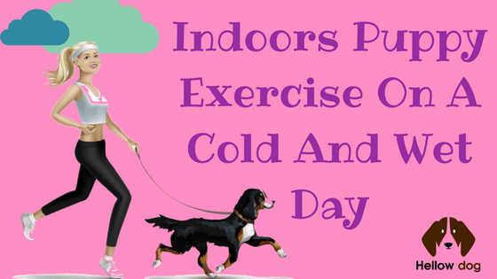 How to Exercise Your Dog in the Winter