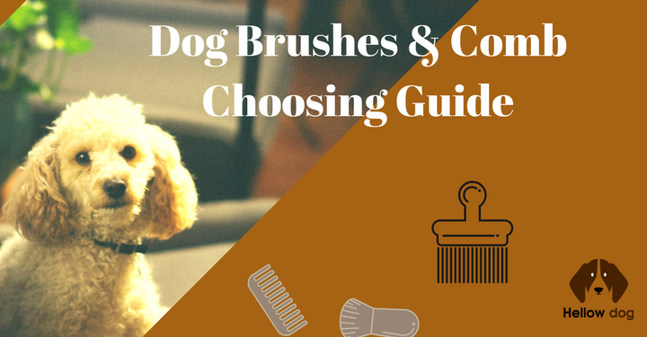 Best Dog Brush for Short Hair Shedding