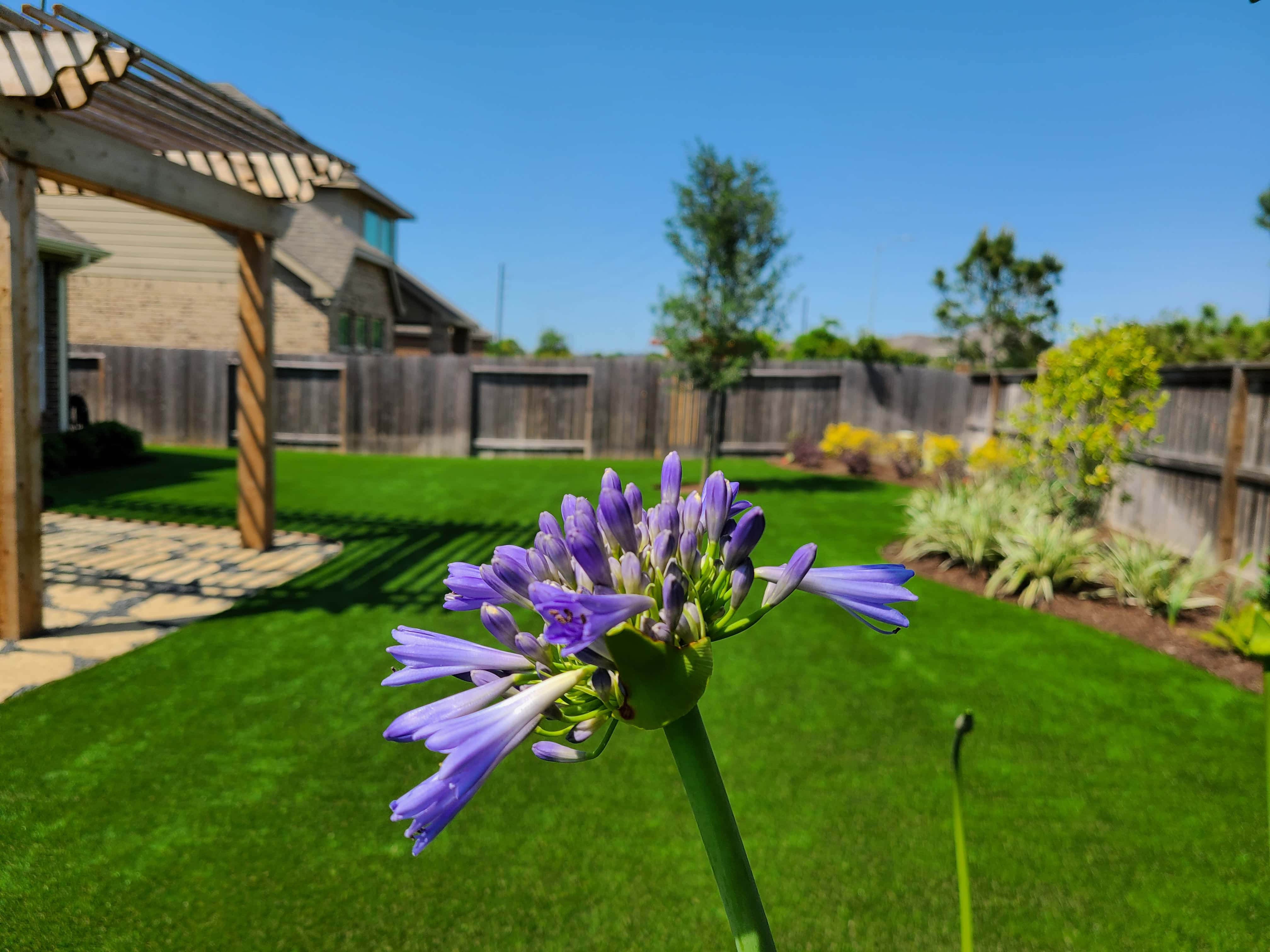 helms-landscape-synthetic-turf11