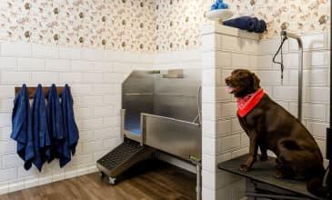Raleigh Slabtown Pet Spa