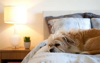 A sad dog sitting on a bed inside an apartment
