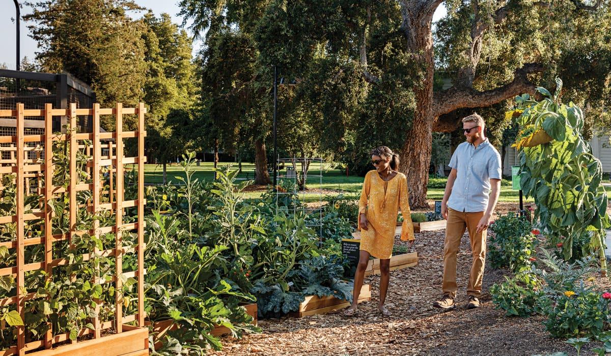 Mansion Grove Garden