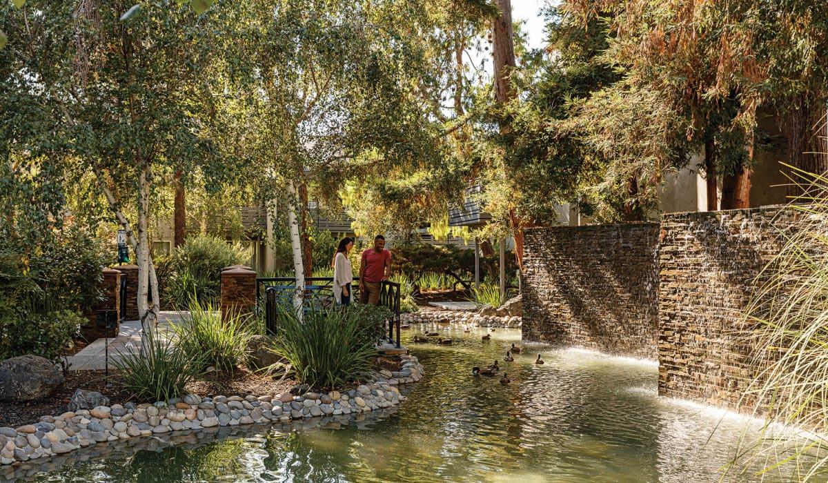 Shadowbrook Pond