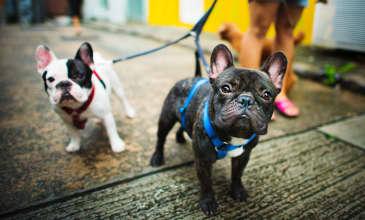 Explore the Bay Area: Dog Friendly Hikes