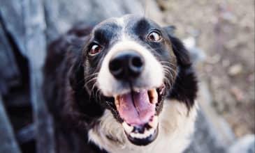 Explore Seattle: Dog Friendly Hikes