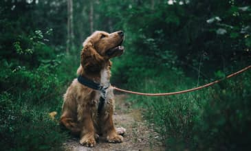 Explore Portland: Our Five Favorite Dog-Friendly Hikes