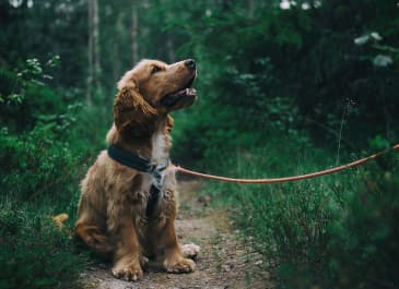 Explore Portland: Our Five Favorite Dog-Friendly Hikes