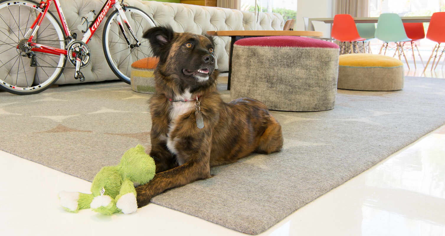 A brown and black dog sits on a rug at Metropolitan apartments in San Mateo
