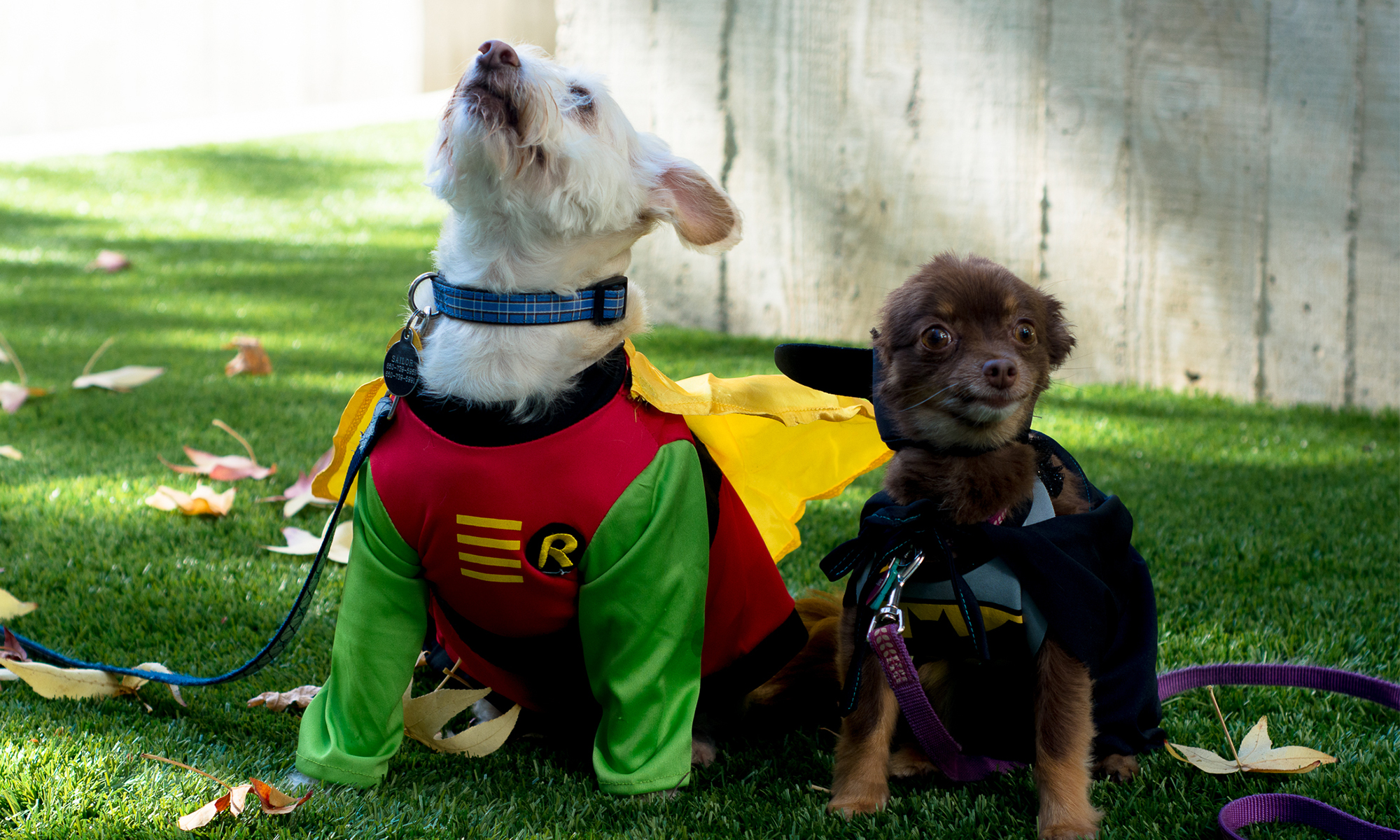 Dog Howl-oween Costumes