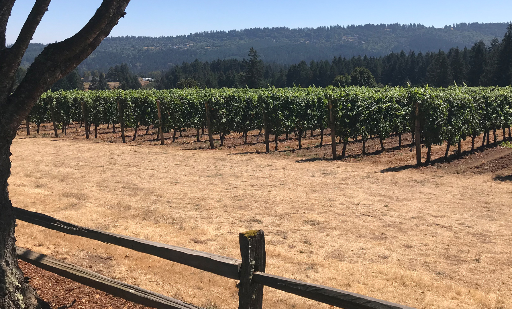Portland Wine Country: Harvest in Willamette Valley