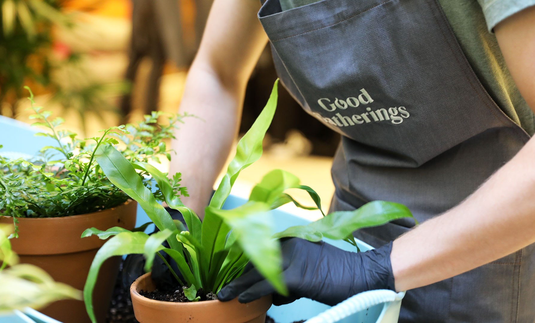 Good Gatherings: How to Houseplant