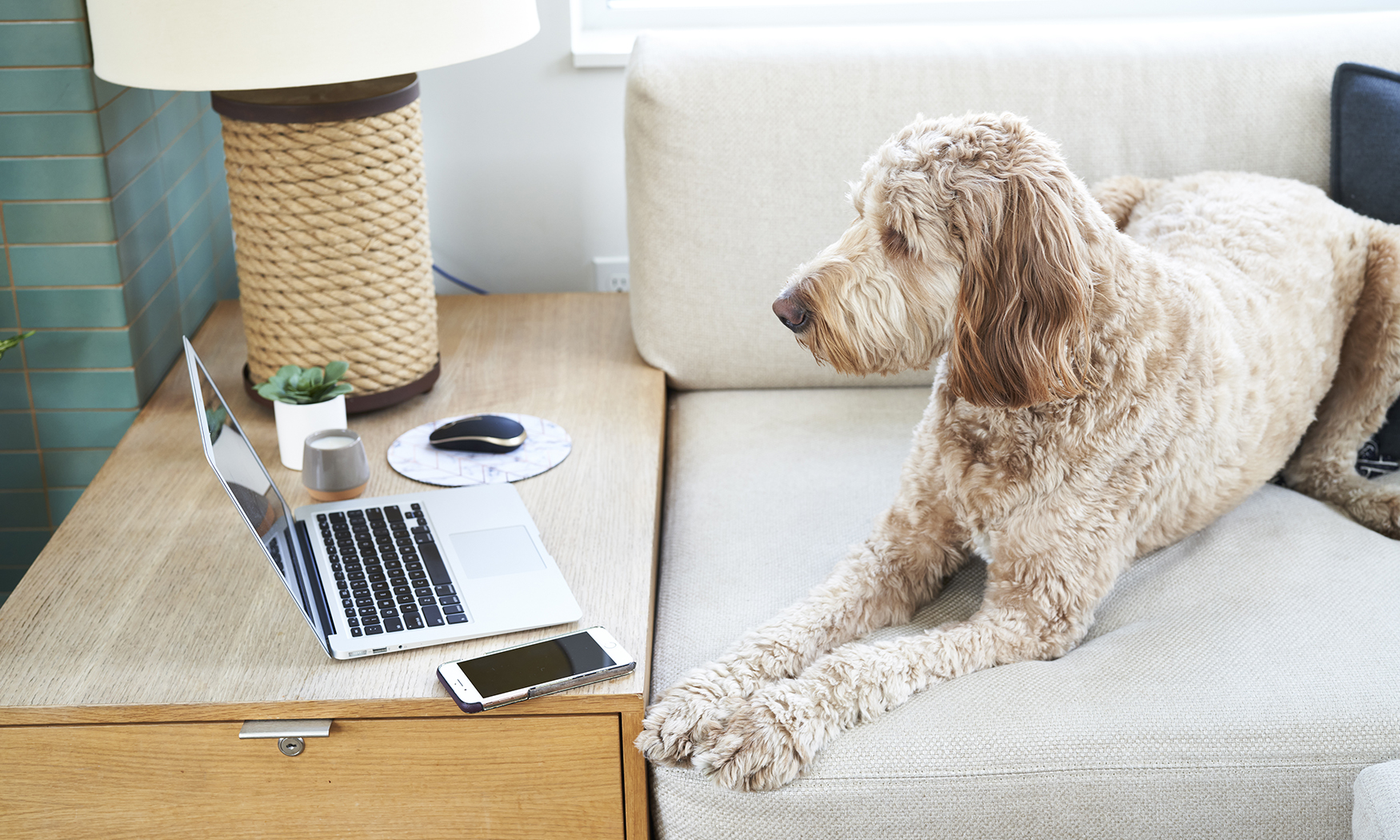 Power Your Productivity: 5 Work From Home Essentials