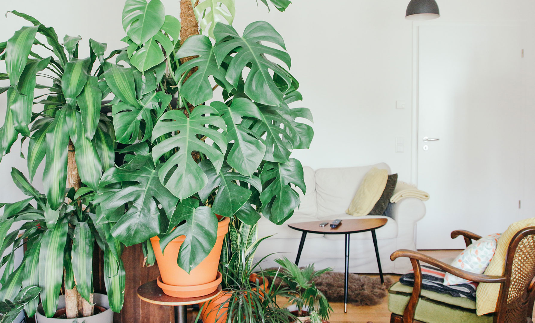 green living in your apartment home