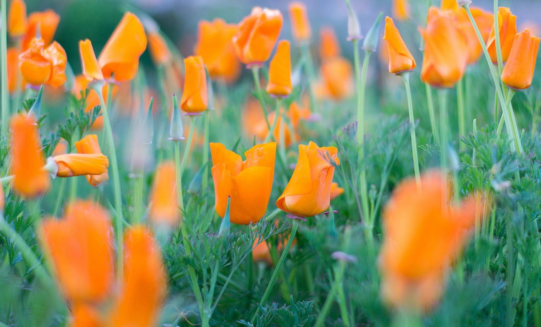 Explore the Bay Area: Spring Wildflower Hikes