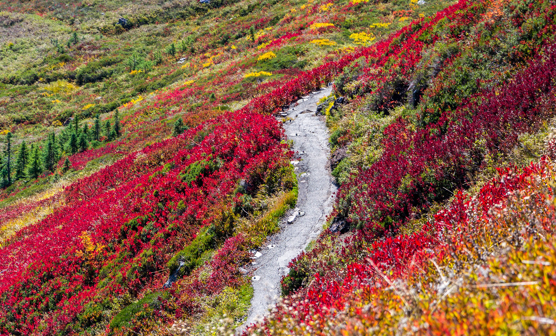 Explore Washington: Welcome Spring With These Trips