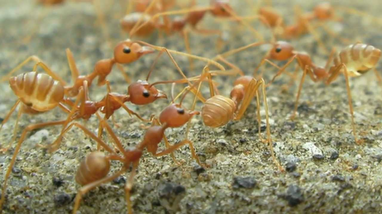 Ants Rafting on Water - Scientific Research